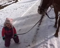 Little Girl Walking Horse In Snow Gets Stuck. Horse's Response Is Melting Hearts Everywhere