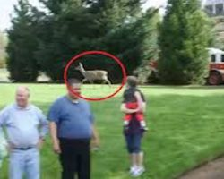 Mother Deer Watches In A Panic As Firefighters Try To Free Her Baby