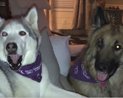 Husky Upset Over Outcome On TV Show, Throws Tantrum To Mom And Brother