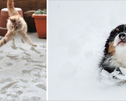 24 Baffled Pets Who Don't Know What To Think Of This White Fluffy Stuff