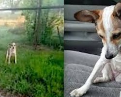 Abandoned Dog Crying on the Side of the Road just Wants to Kiss her Rescuer! So Heartwarming