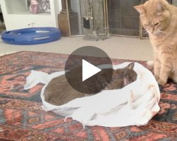 "Cat's friend died from cancer, so his owners let her say ""goodbye""… Now Watch How The Cat Responds"