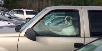 Man Investigates Who's Honking Their Horn — Cracks Up When He Sees Annoyed Dog