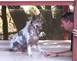 Dog Stuck In Shelter For 4 Years, Now Watch His Reaction When Told He's Getting Adopted