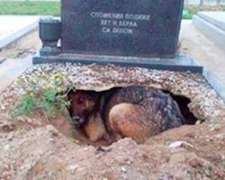 Dog looks to be 'grieving' for her deceased owner in grave. Here's what she was hiding
