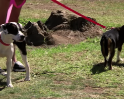 Her 2 Dogs Catch A Familiar Scent At The Park…Then She Looks Over, And Her Heart Shatters