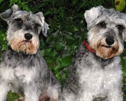 Dogs Run Away While On Walk, Then Return After Owners Come Up With Genius Idea