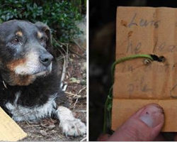 Family Dog Goes Missing, Eventually Returns Home With A Strange Note On His Collar.