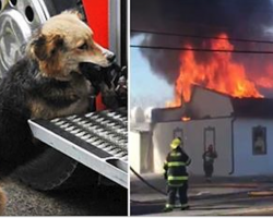 Firefighters were putting out the fire in this house – then see the dog carrying something in its mouth