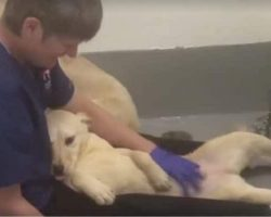 She's Never Been Pet Before. Watch What Happens When He Shows Her Love For 1st Time