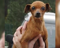 She spent 12 years in a cage at the puppy mill, but watch when her rescuers show up