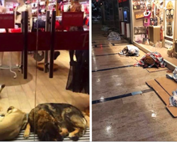 Stray Dogs Take Shelter In Mall During Snowstorm, Thanks To These Nicest Store Owners