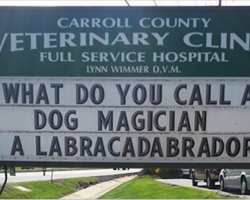 9 Signs That Prove A Vet Can Have A Great Sense Of Humor