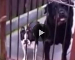 When He Shouts 'HELLO!' The Dog's Response Leaves EVERYONE In Stitches!