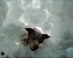 (Video) Actual Footage Of Boy Being Saved By Avalanche Rescue Dog
