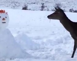 Snowman Blocks Deer's Path – Deer's Response Has Internet Rolling On Floor With Laughter