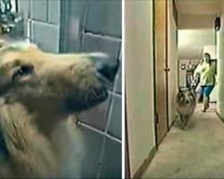 Dog keeps barking at owner in shower, then she realizes something terrible was about to happen