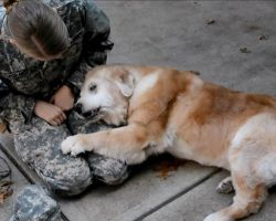 Old Golden Retriever Has Heart-Wrenching Reaction To Soldier Owner Coming Home