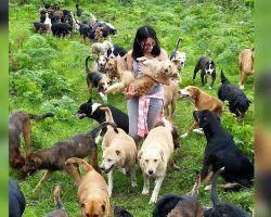 "Meet the ""Mother Teresa of Mutts,"" whose no-kill sanctuary nurtures 900 stray dogs"