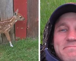Man Rescues Fawn With Broken Leg – She Thanks Him In Remarkable Fashion