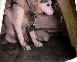 Poor Bella Was Chained Up – But She Dug A Hole For One Special Reason
