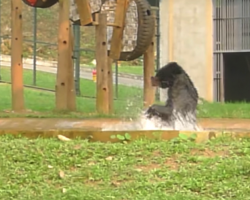 Rescued Bear Is So Happy He Can't Stop Jumping