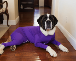 These Dog Leotards Are Not Only Adorable—They Solve A Problem That Plagues Most Dog Owners