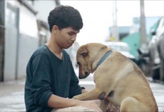 Stray Dog Melts Into Man's Arms When He Gives Her A Hug