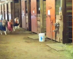 Tiny Horse Race Erupts In Stables, Owners Lose It When Unseen Outsider Sprints Around The Corner