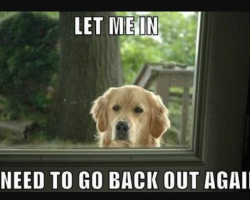 10 Hilarious Dog Memes To Save The Day