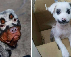 24 Dogs With Some Of The Strangest And Cutest Fur Markings