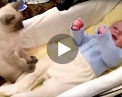 This Baby Suddenly Becomes So Excited That The Cat Is Left Completely Confused!