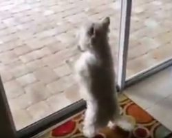 Dog Moves Into New Home And Adorably Freaks Out When She Notices What's In The Backyard