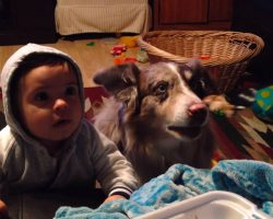 Mom Bribes Baby With Food So He'll Say 'Mama,' Dies Of Laughter When Dog Says 'Mama' First