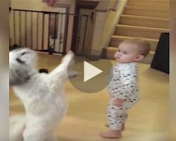The dog stands for a treat, but now keep your eyes on the baby! ROFL!