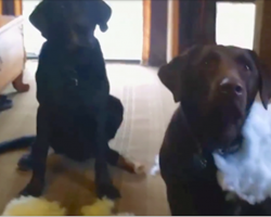Dad Asks Which Dog Made The Giant Mess, Gets Hilarious Straightforward Answer