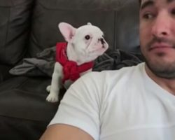 He Tells His Puppy How Handsome He is– His Puppy's Response Couldn't Be Cuter