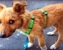 Homeless Pup Wanted A Home So Badly, He'd Follow People Home. Then One Day, Someone Kicked Him…