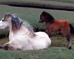 Baby Horse Refuses To Leave Mom's Side. Rescuers Discover They Have To Act Swiftly