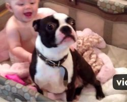 Mom tells the dog to get out of the crib, but he disobeys her in a hilariously sweet way