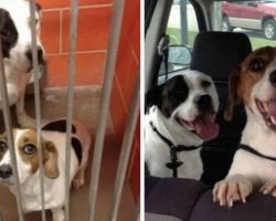 8 Heartwarming Photos Of Pets Taken Before And After Adoption