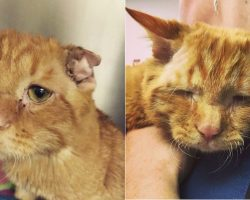 Shelter Decides To Euthanize A Cat Who Was 'Unadoptable' – Look How Kitty Transforms Within One Hour!