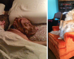 20 Photos That Prove All Is Well With The World When You Have A Pet