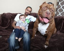 5 BIGGEST Dogs In The World