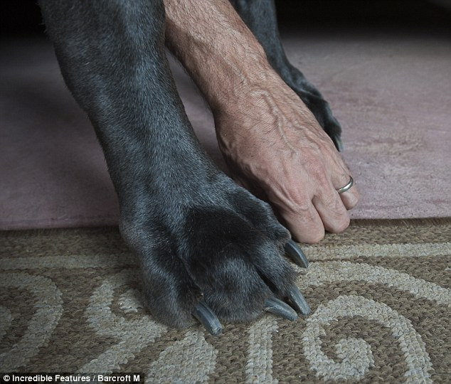 Paws for thought: George's giant feet dwarf Dave's hand