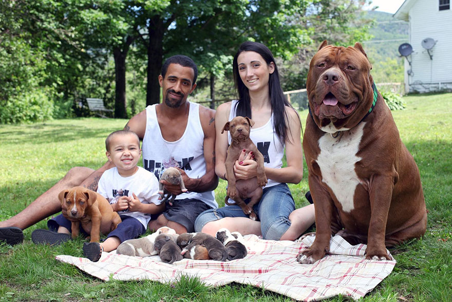 hulk-pitbull-largest-puppies-1