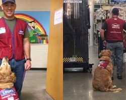 Veteran and his service dog can't find a job. Then Lowe's hands them 2 red vests