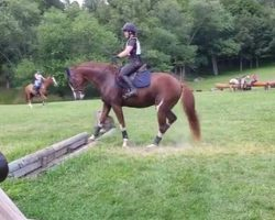 The Horse Approaches The Obstacle And Has A Most Unusual Way Of Jumping