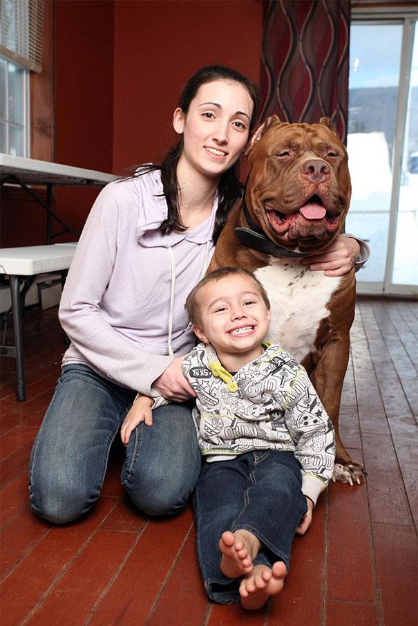 world-biggest-pitbull-the-hulk-dark-dynasty-k9-11
