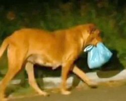 Dog Receives Food From Kind Woman. Instead Of Eating It All, She Brings It To Someone Else